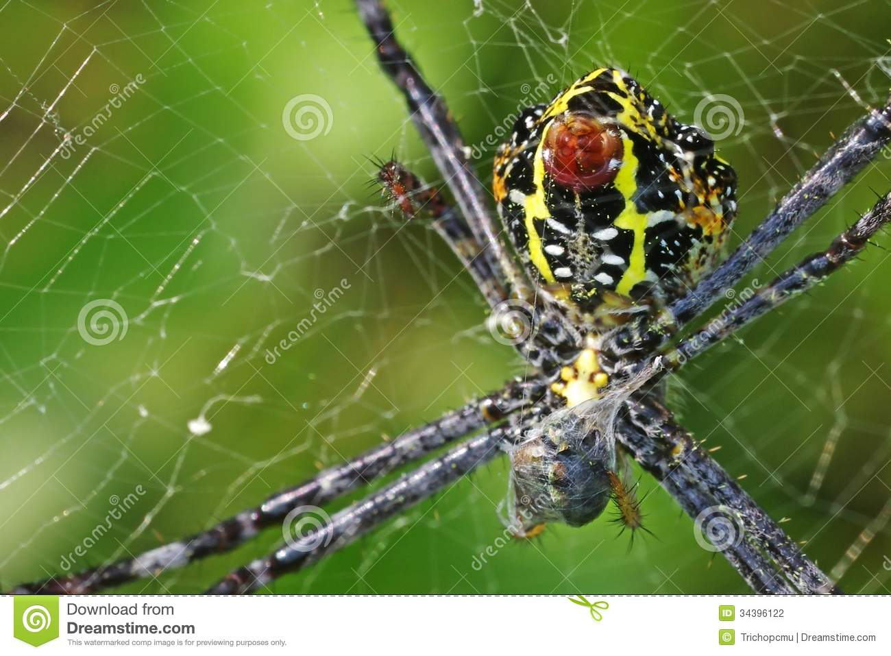 Spider in web with prey - photo#27
