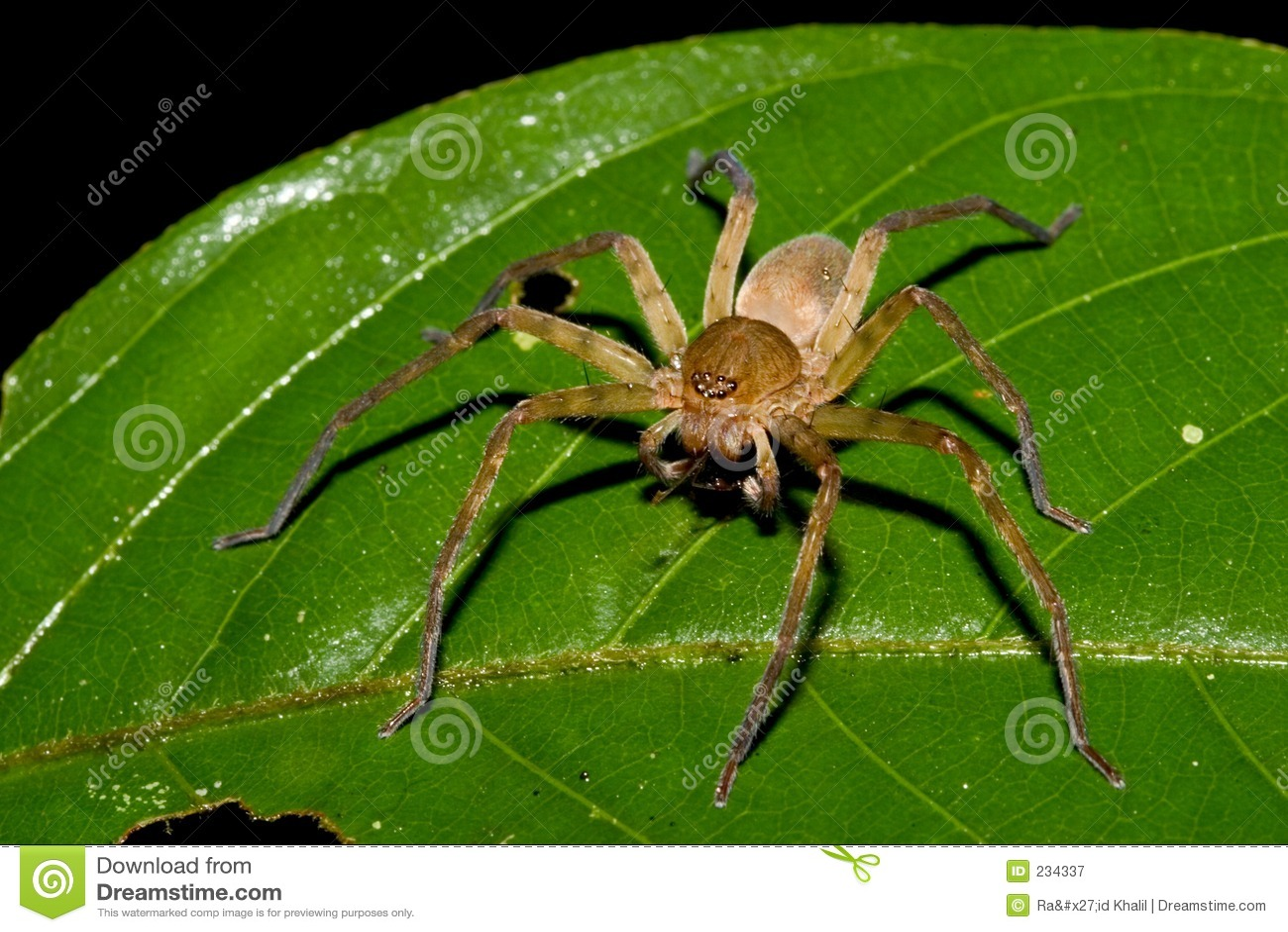 Spider-Ecuador