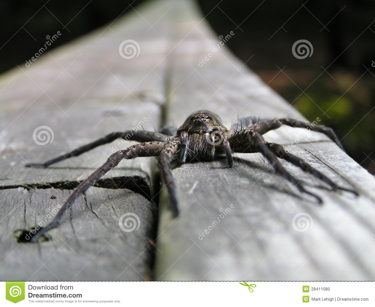 Download Spider face stock photo. Image of creature, bite, invertebrate - 28411080