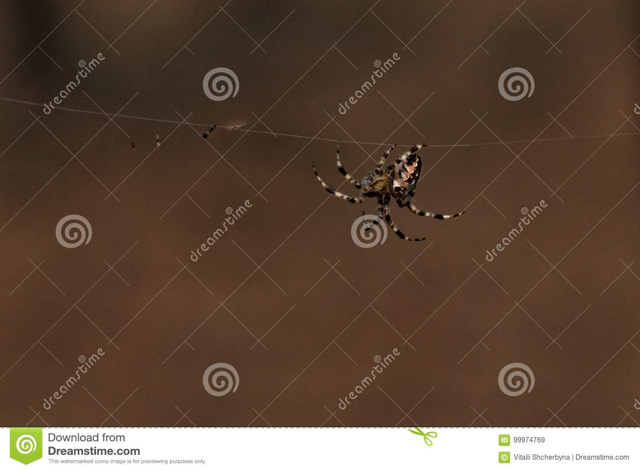 Spider garden-spider stock image. Image of creepy, brown - 99974769