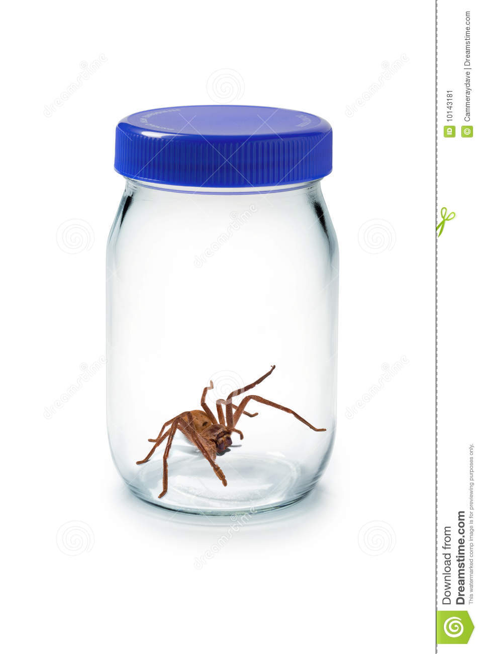 Spider Glass Jar Pest