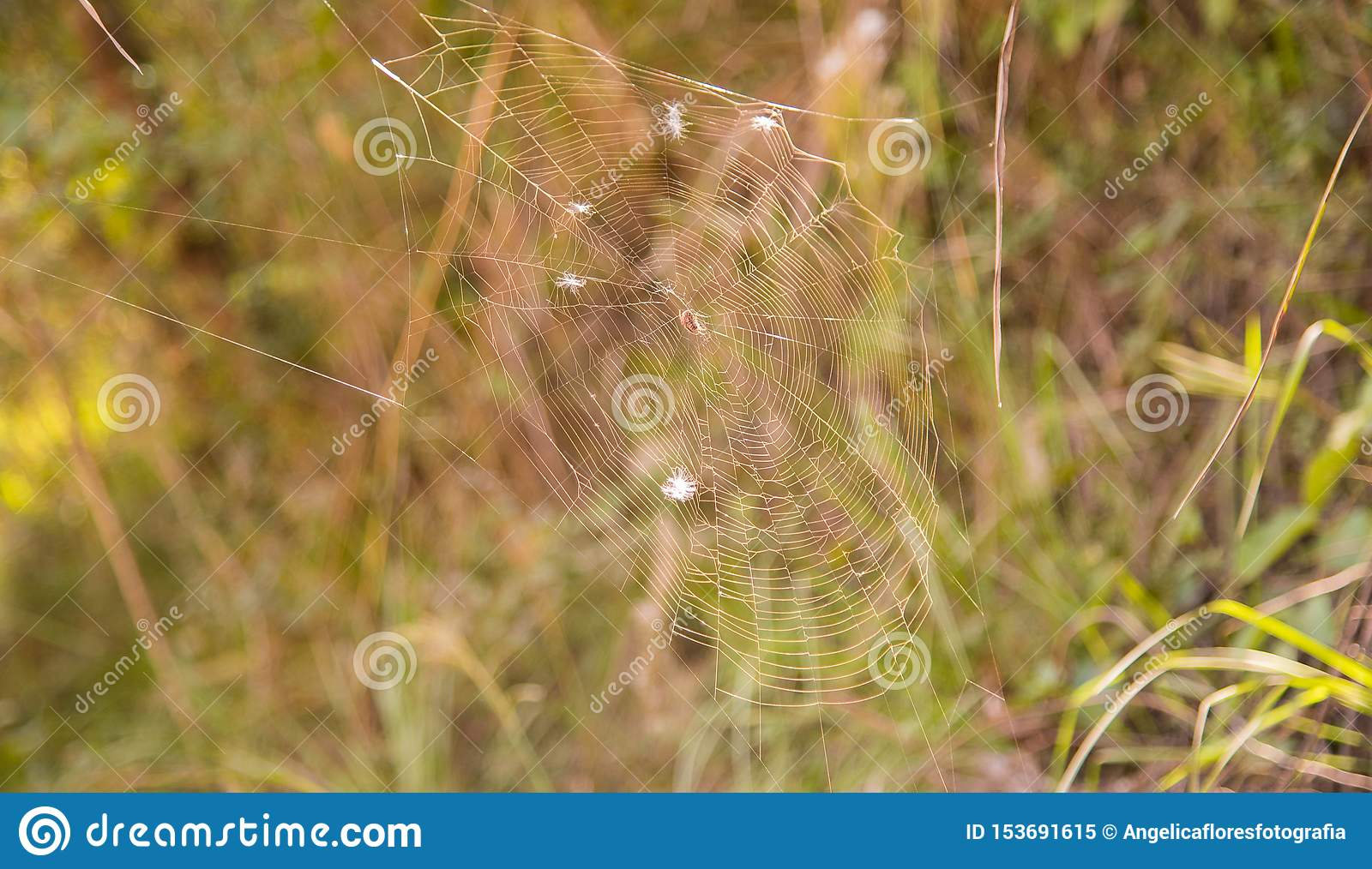 Spider and his morning web