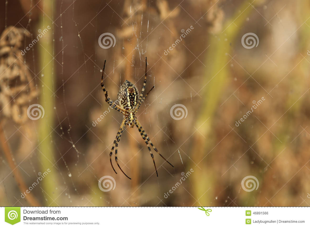 Spider stock photo. Image of large, legs, arachnoid, brown - 46891566