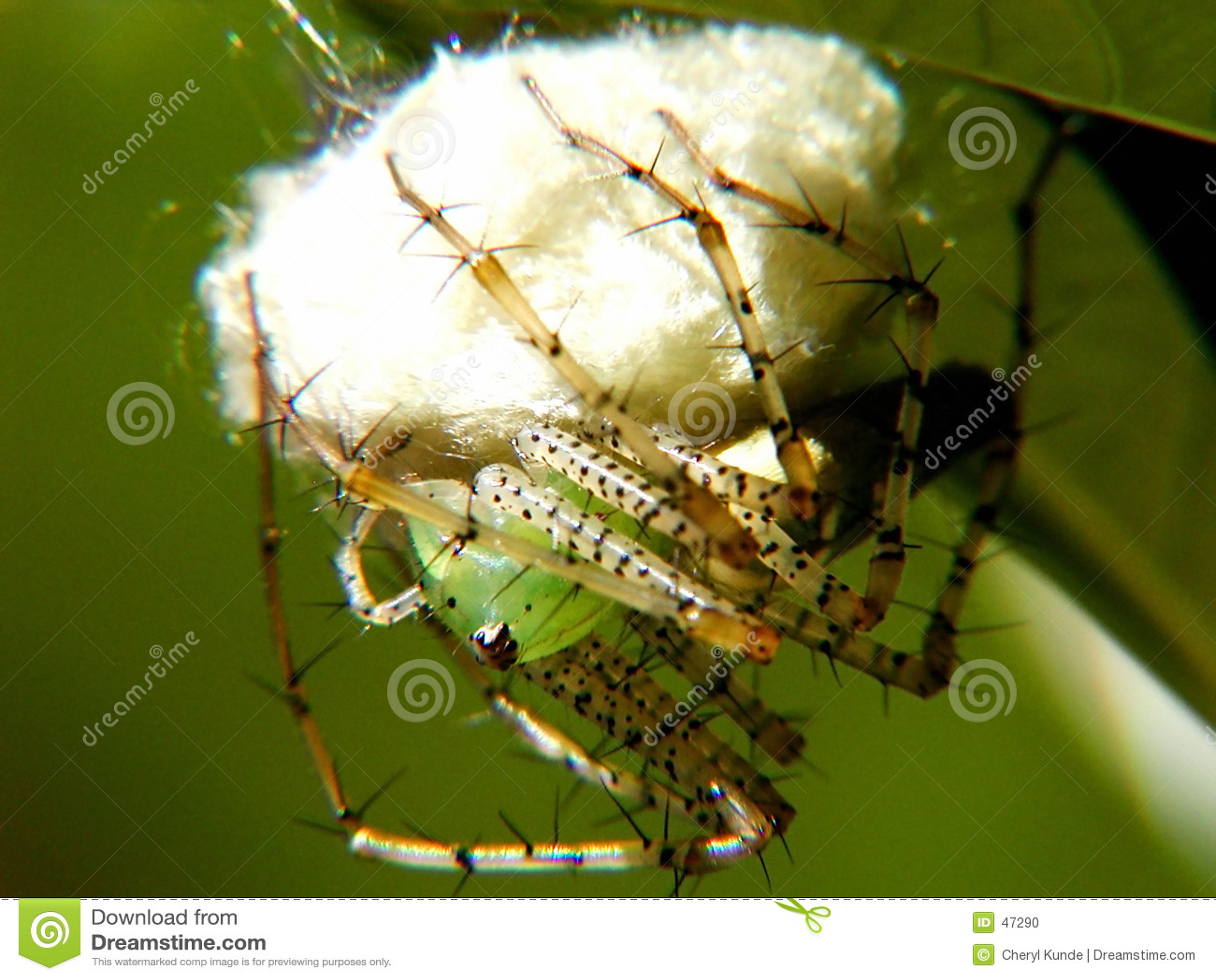 Spider linx