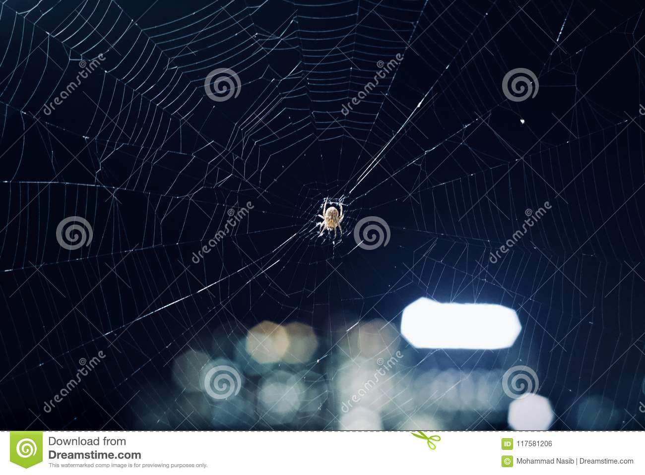 Download A Spider Within A Medium Spiderweb Background Photo Stock Photo - Image of photo, backdrop: 117581206