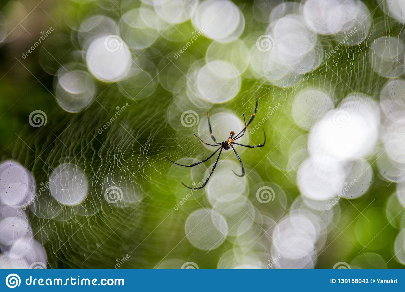Spider on net with blur green bokeh background