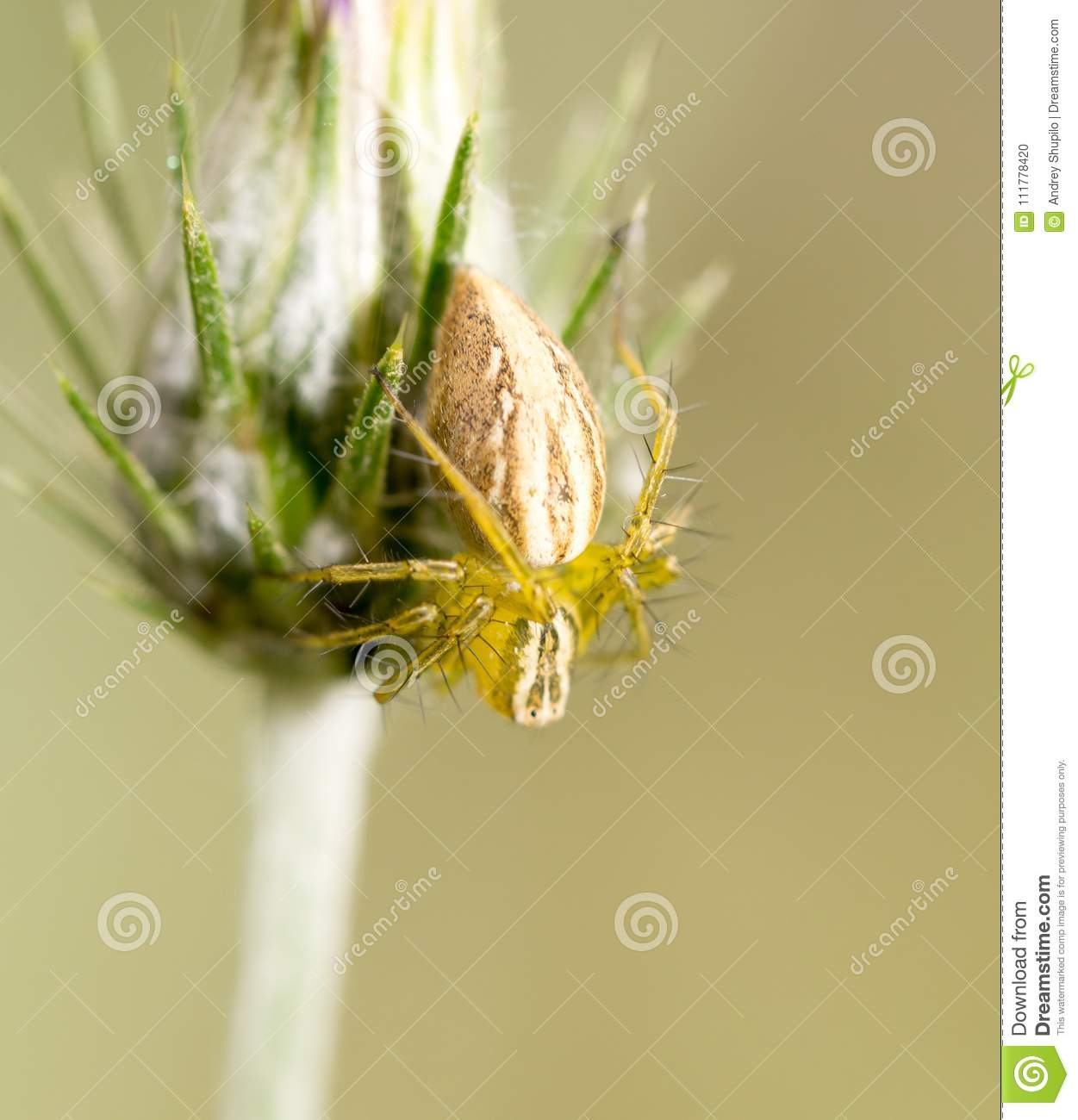 Spider on a plant in the nature