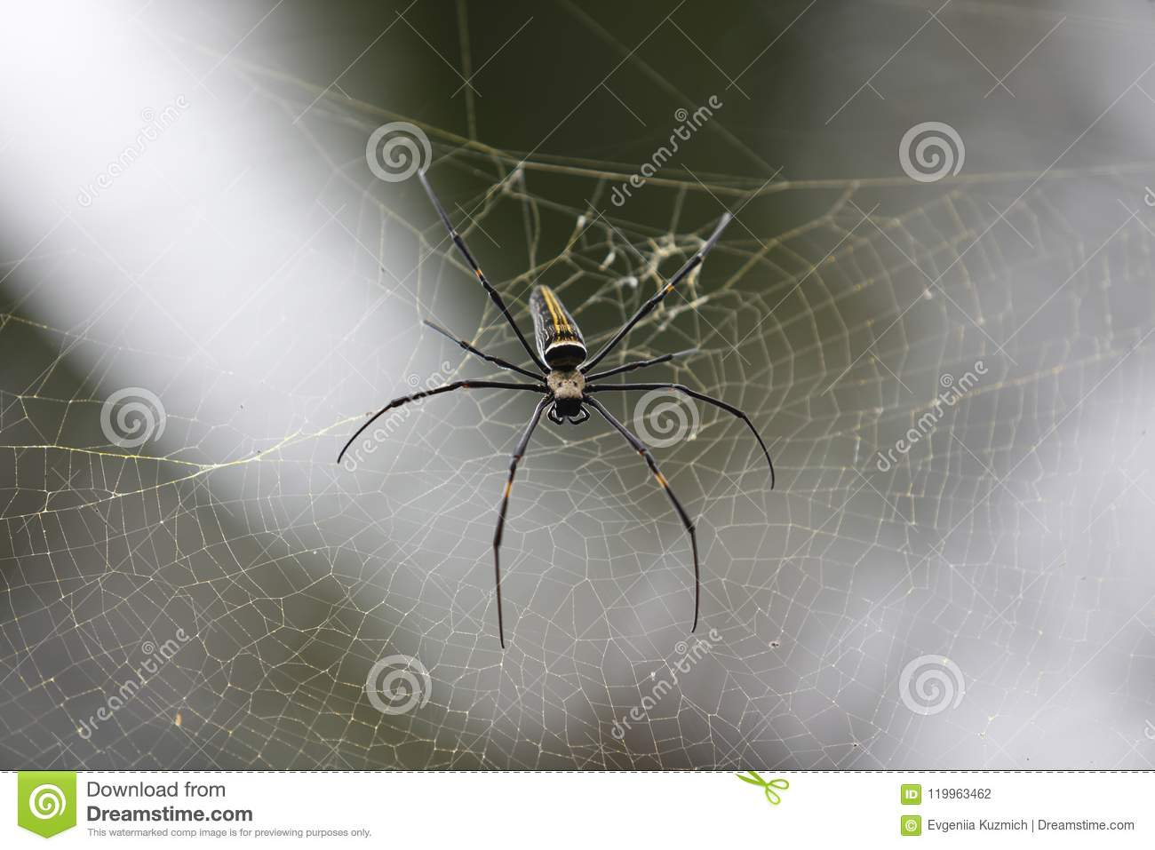 Spider and spider web close-up in natural environment