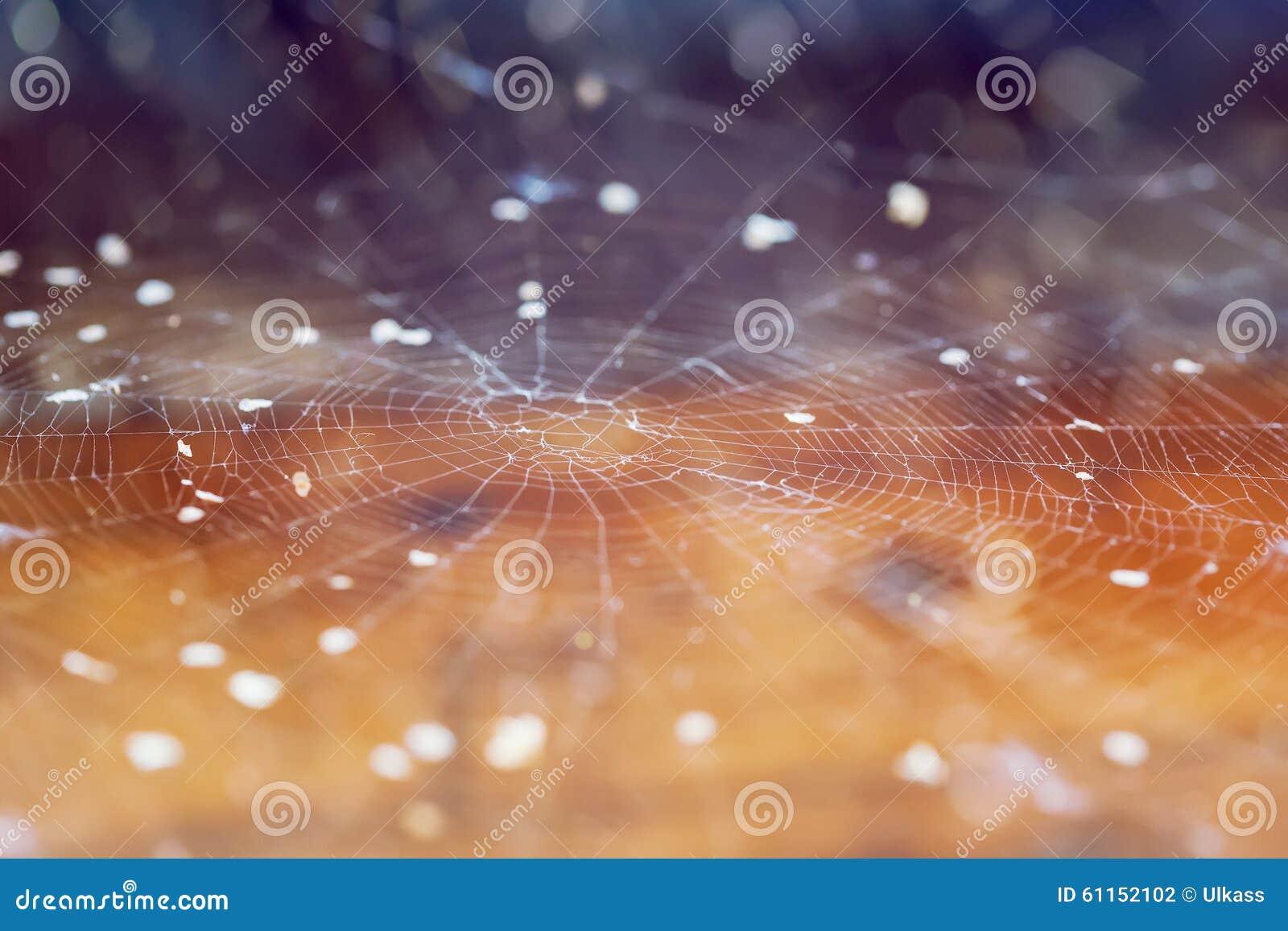 Spider Web Cobweb Autumn Background Stock Photo Image Of Netting Morning 61152102