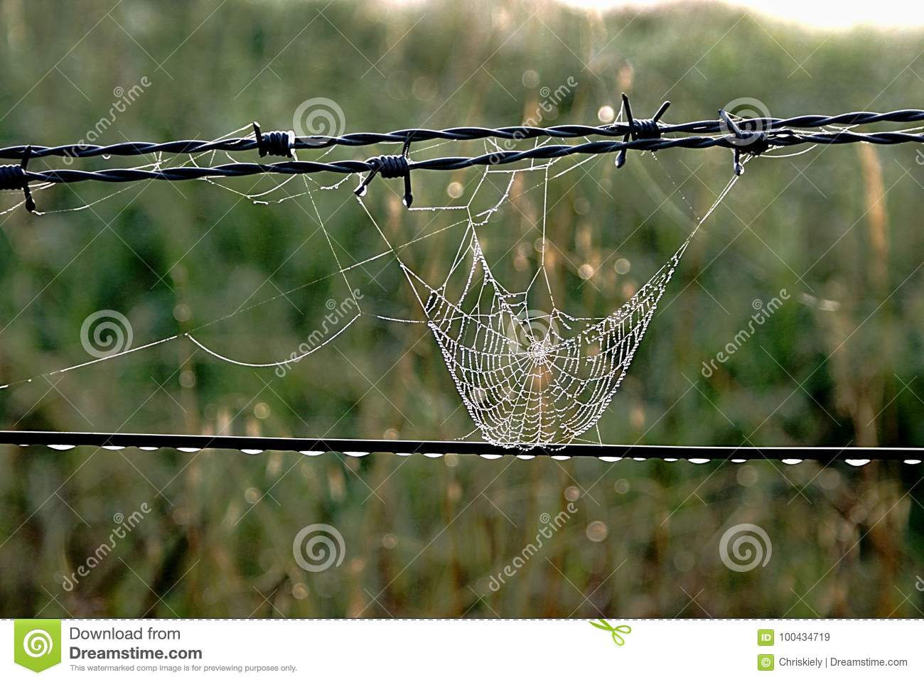 Spider Web on Fence