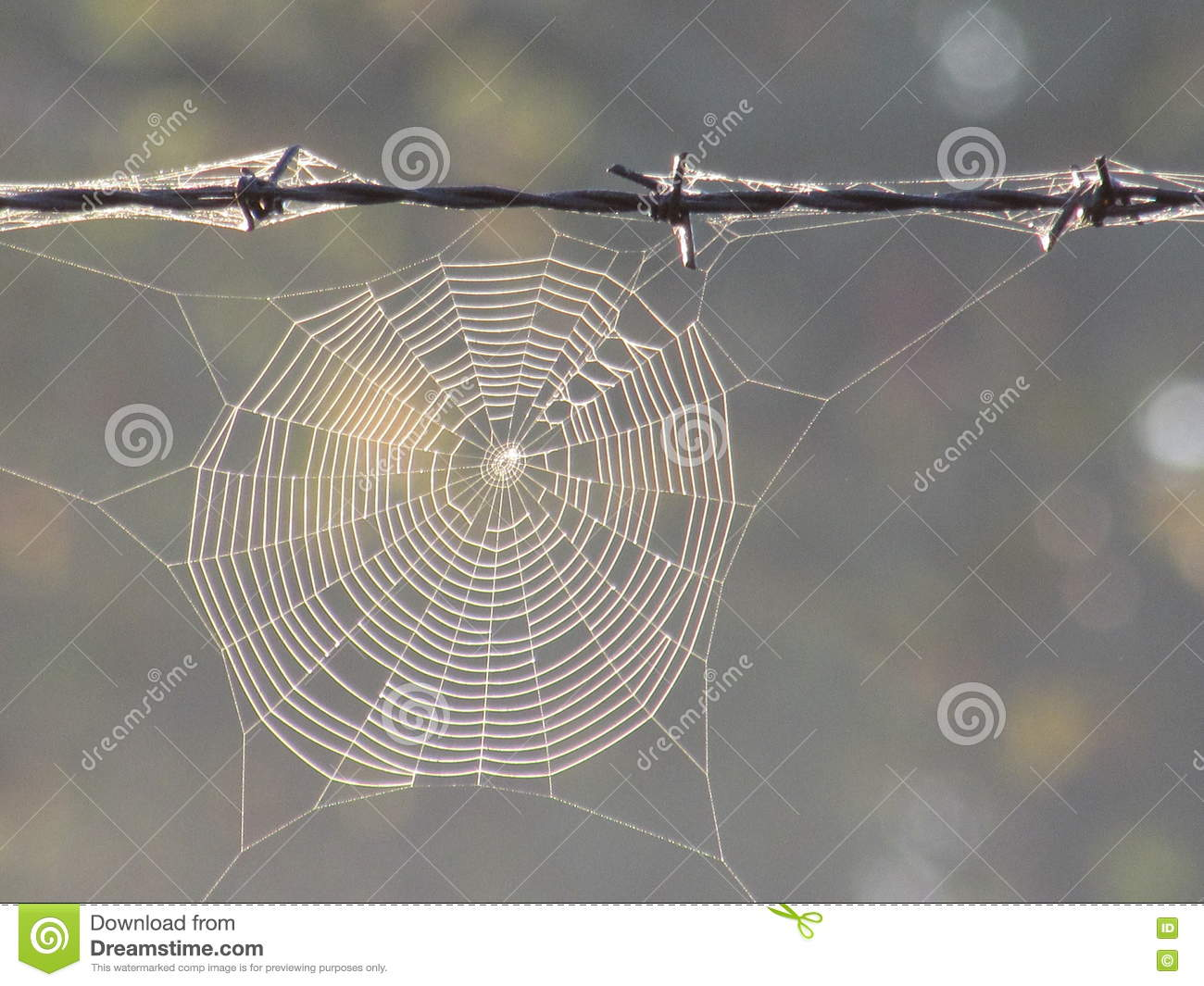 Spider Web In Fog Hanging On Barbed Wire Stock Image - Image of ...