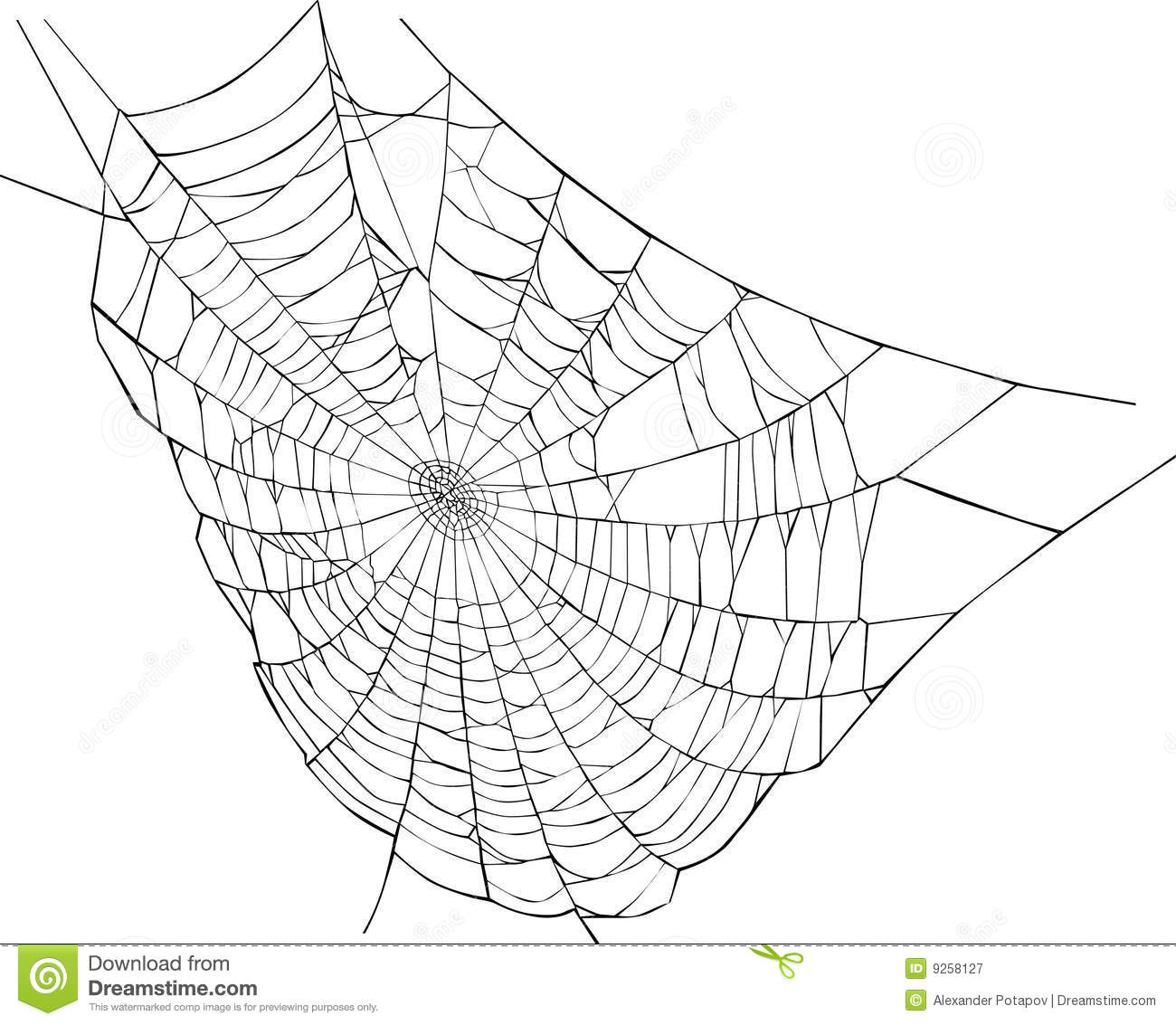 spider web illustration royalty free stock photography image