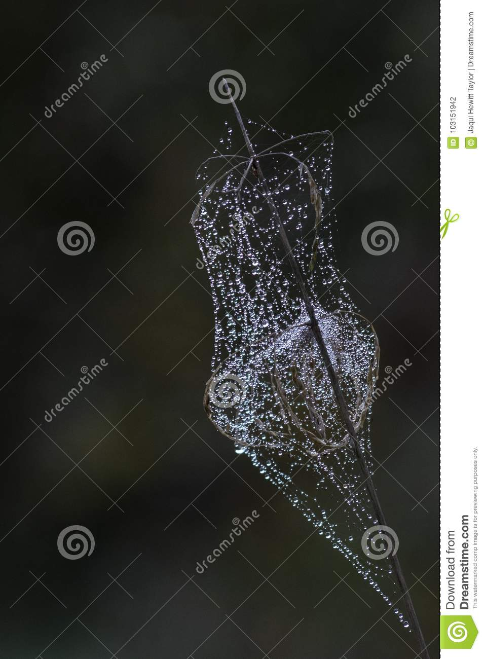 A spider web on a seed head