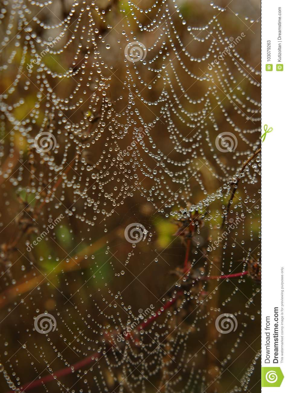 Download Spider Web With Water Drops Stock Image - Image of resistant, droplet: 103079263