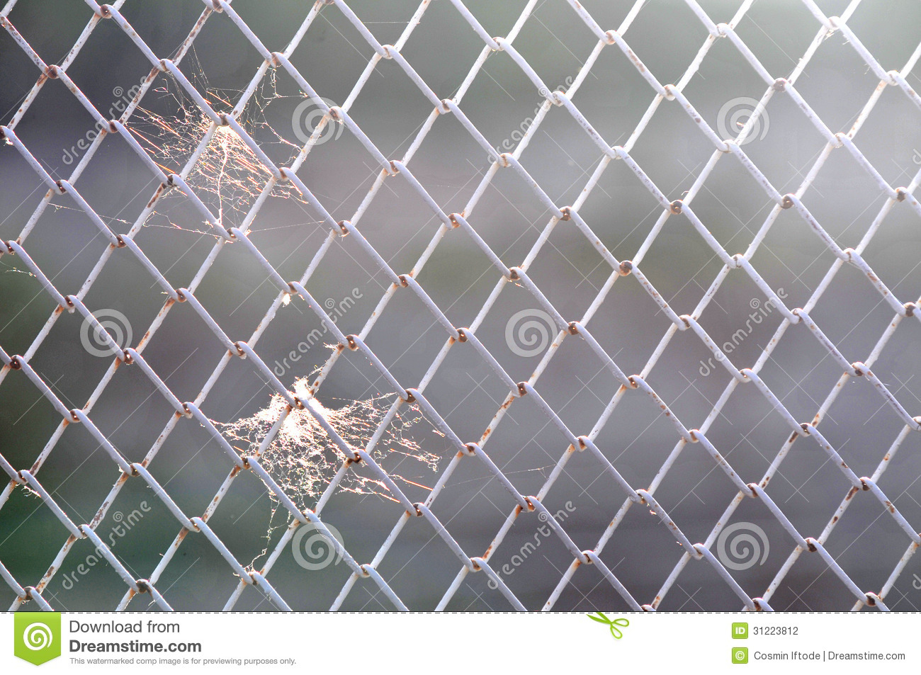 Spider Web On Wire Mesh Fence Stock Photo Image Of Light