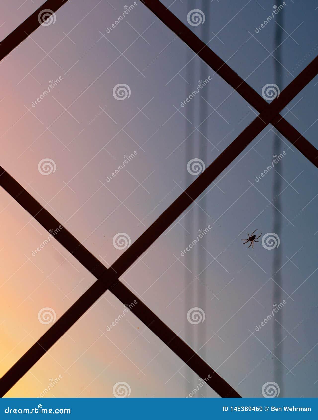 Spider on window