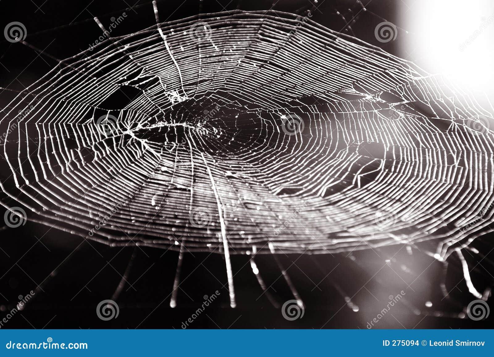 Spiders Web. Sepia