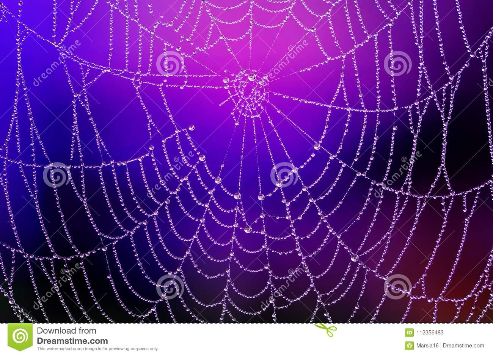 Spiderweb with Dew Drops