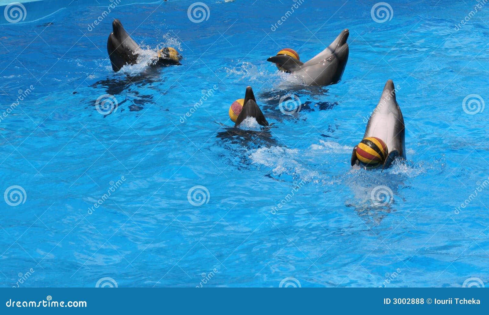 Delphine Spiele
