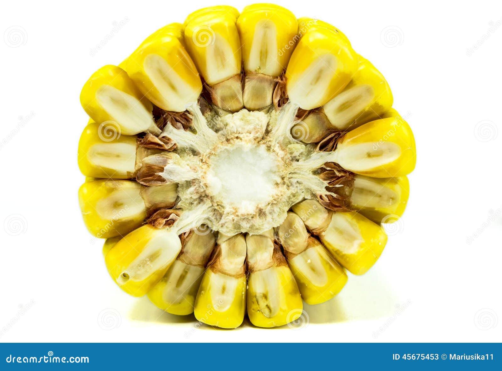 Spiga di frumento, sezione trasversale