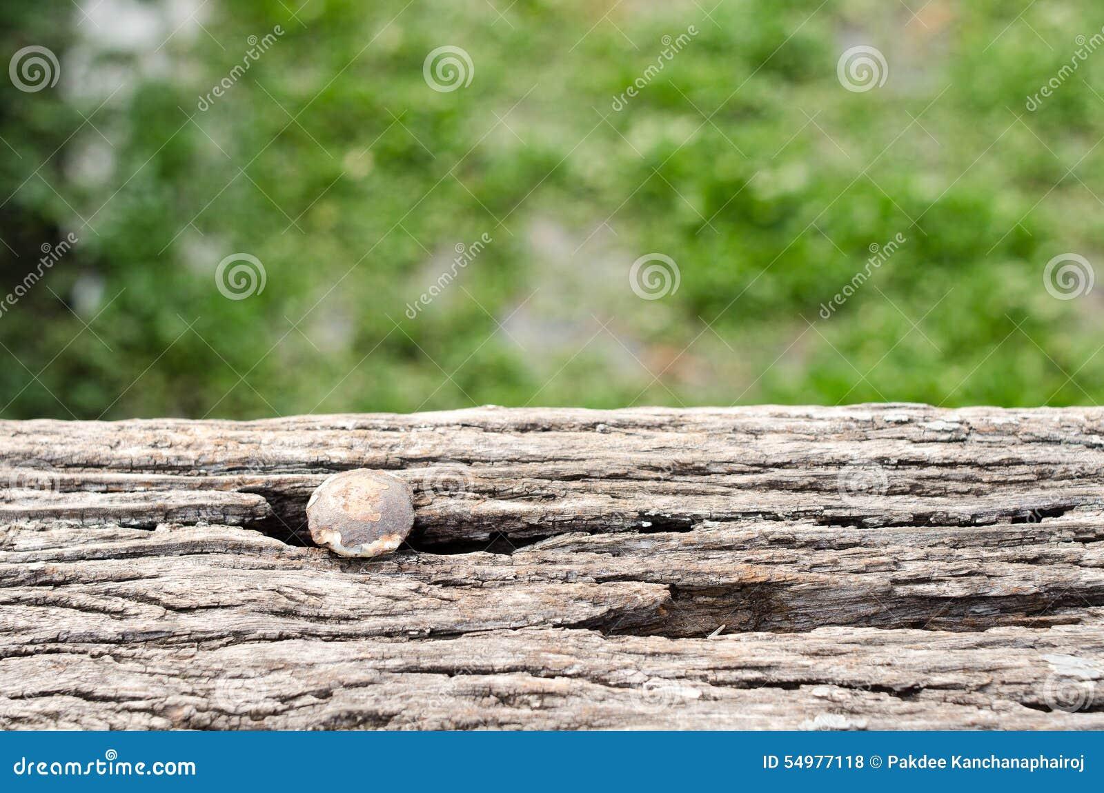 Spika huvud (rostigt, gammalt) som spikas på trä i bakgrundssuddigheten