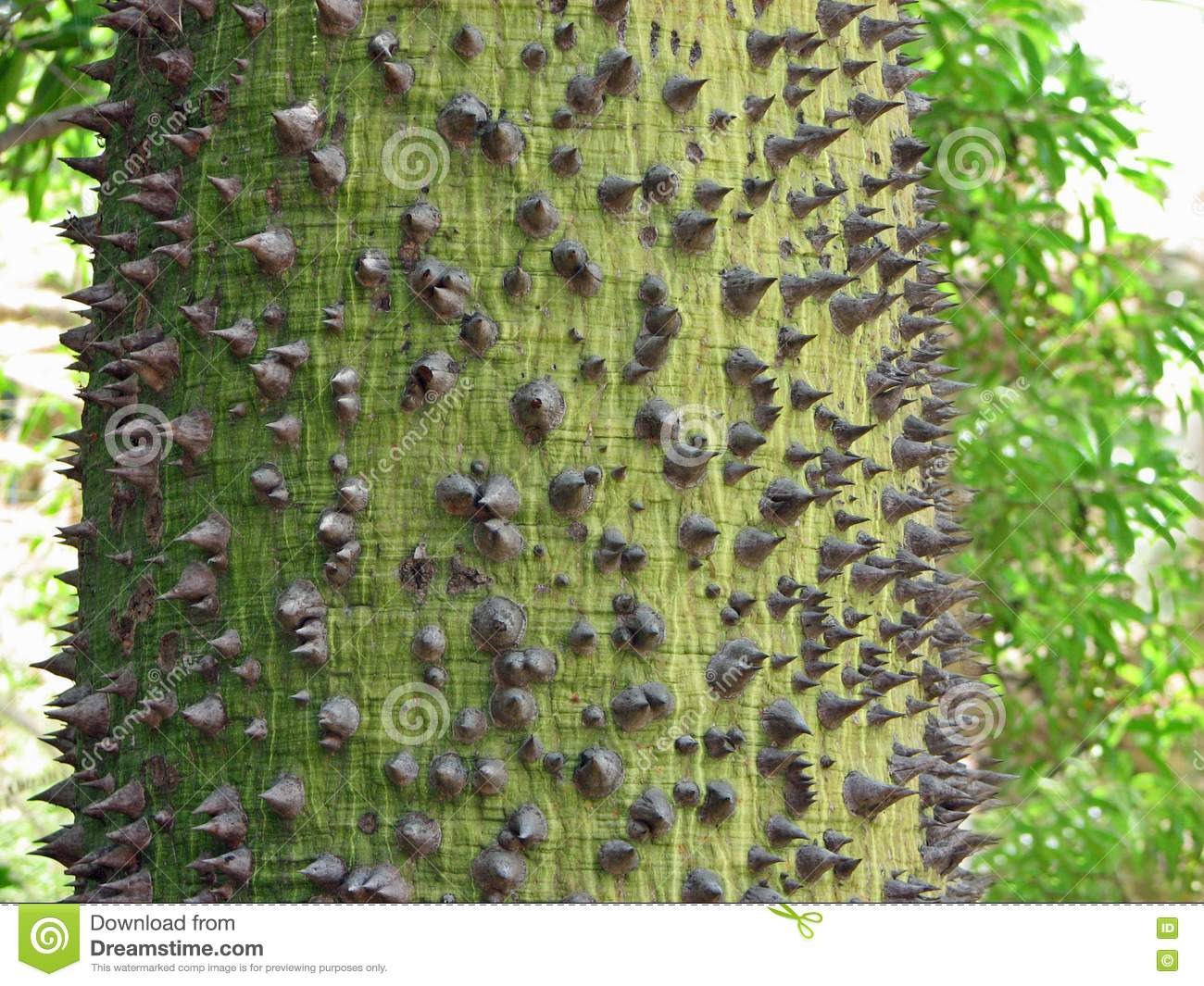 Spike Tree Royalty Free Stock Photography - Image: 20101397