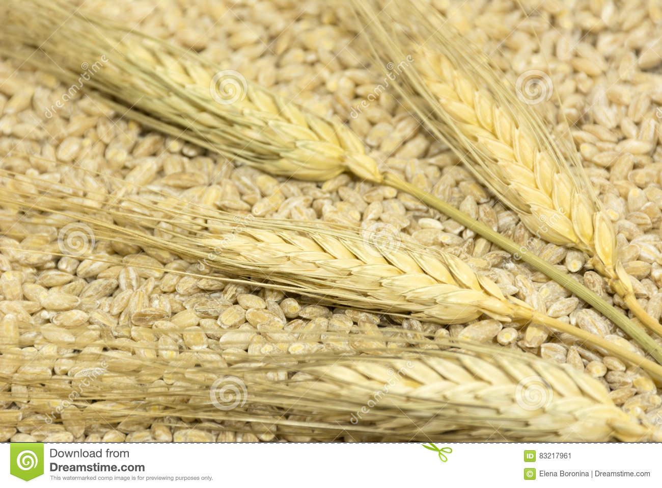 thesis statements on harvesting wheat The biodiversity heritage library works  impact statements forest reserves harvesting law and  economics thesis ph d fu harvesting.