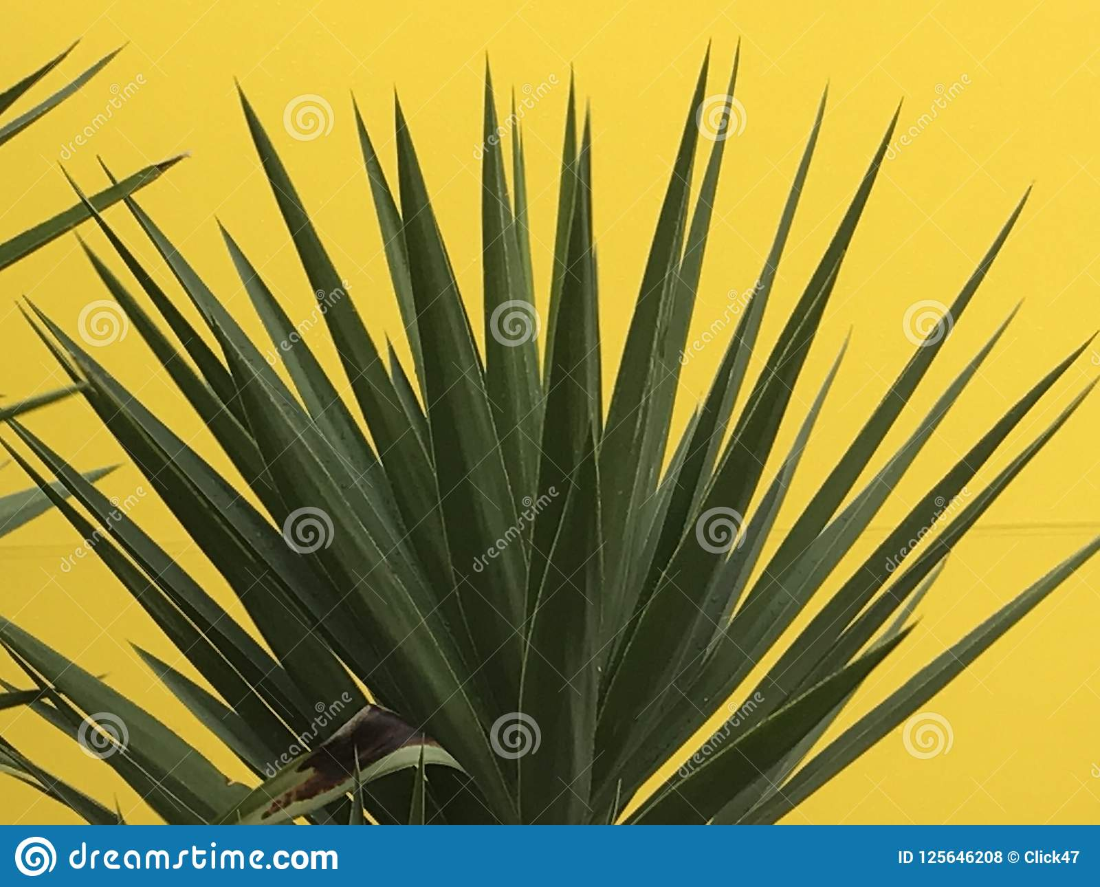 Spiky Green Garden Plant Against Yellow Background Stock Photo