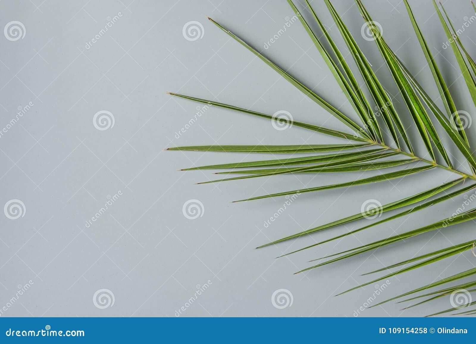 Spiky Palm Tree Leaf On Grey Stone Background. Minimalist Modern ...