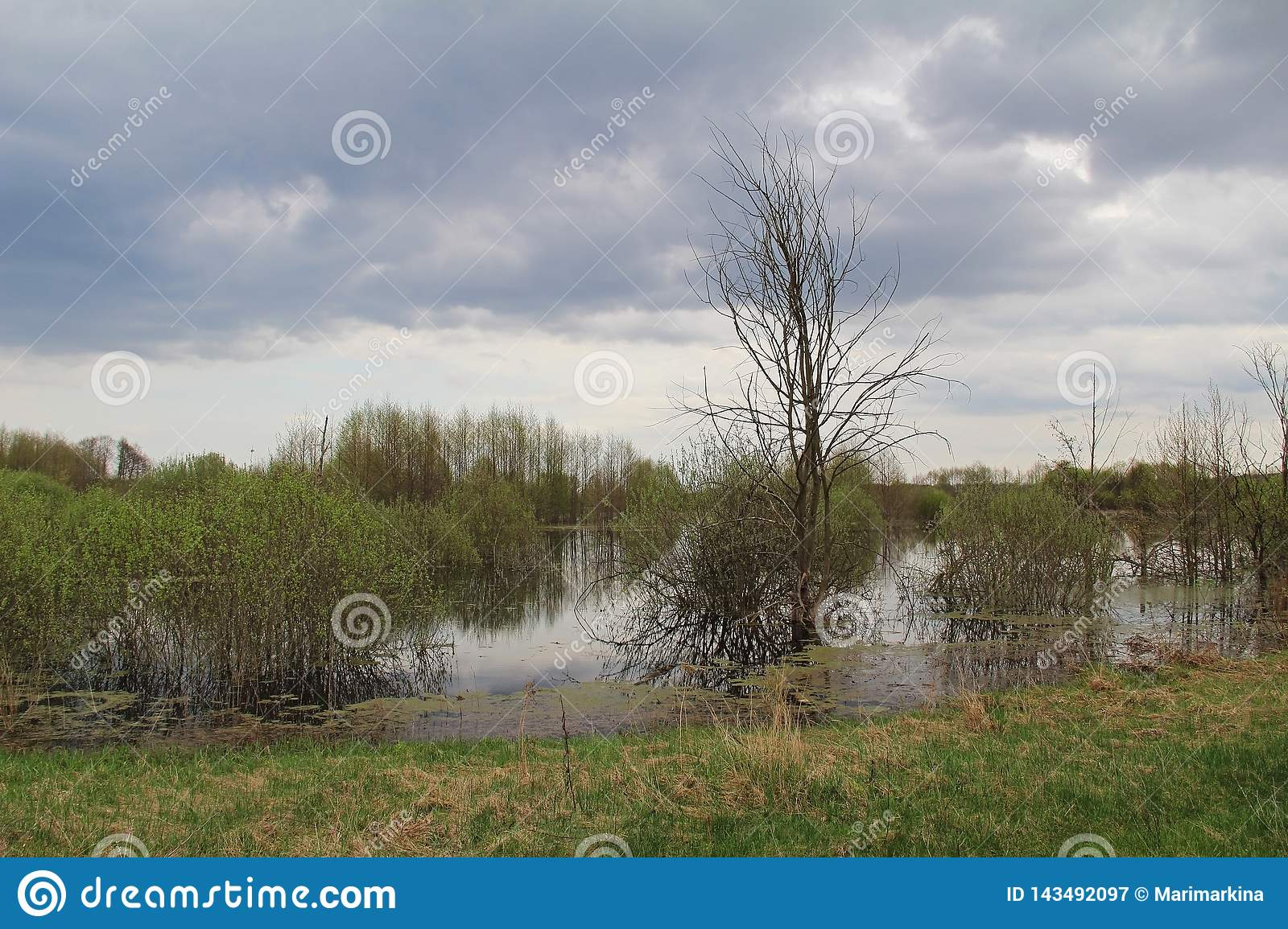 Spill of the river in the fields in early spring in cloudy weather