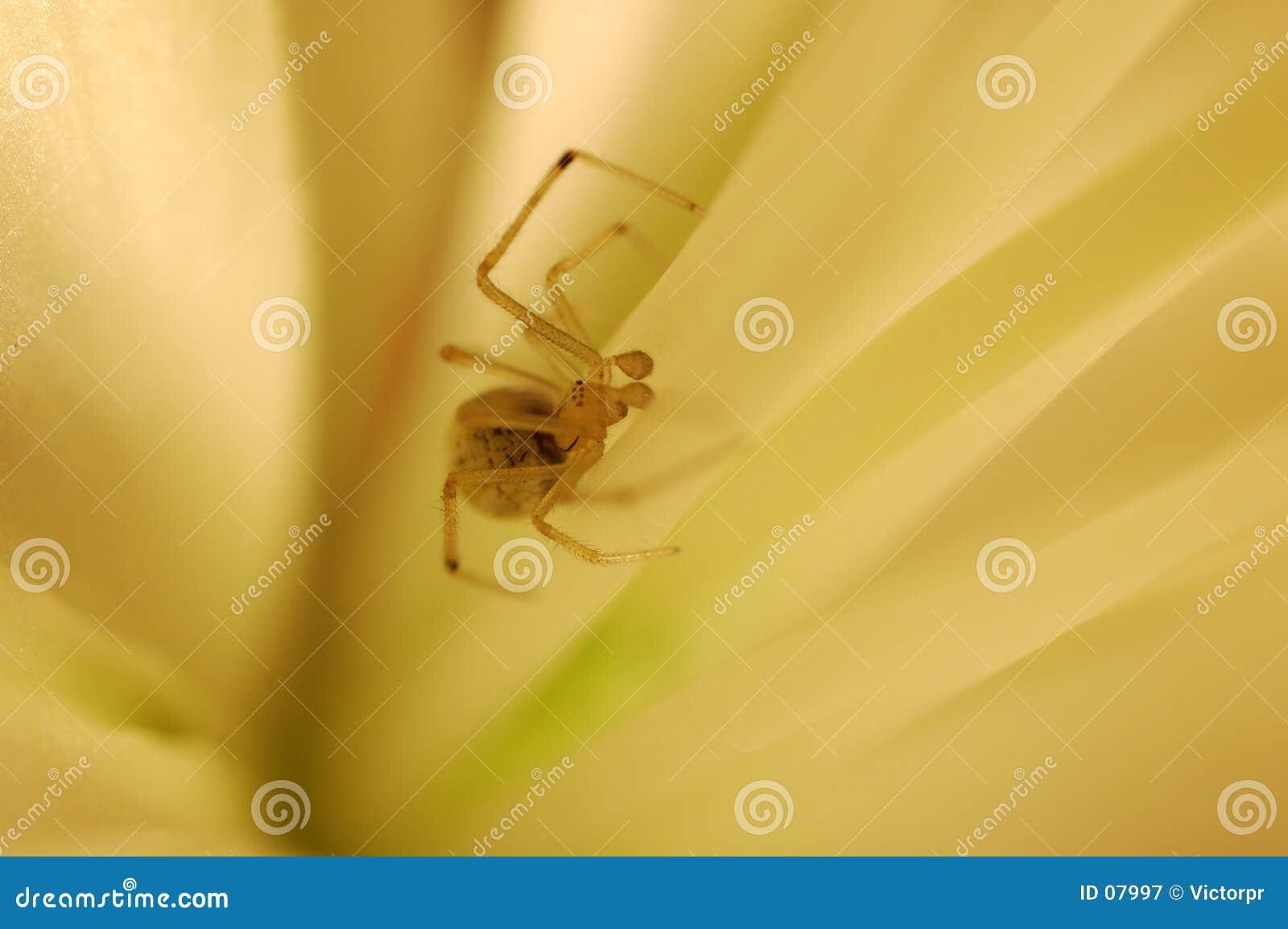 Spin in een bloem
