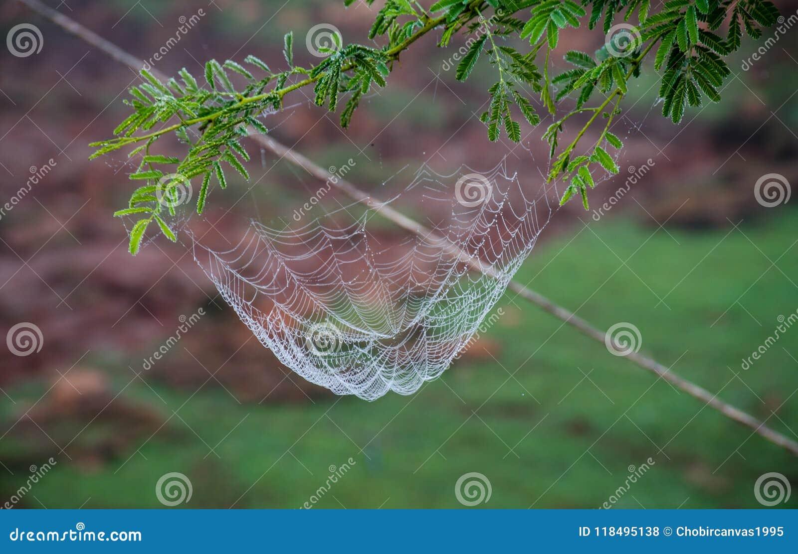 Spin netto met waterdalingen
