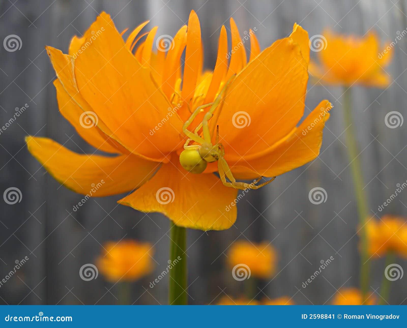 Spin op de bloem