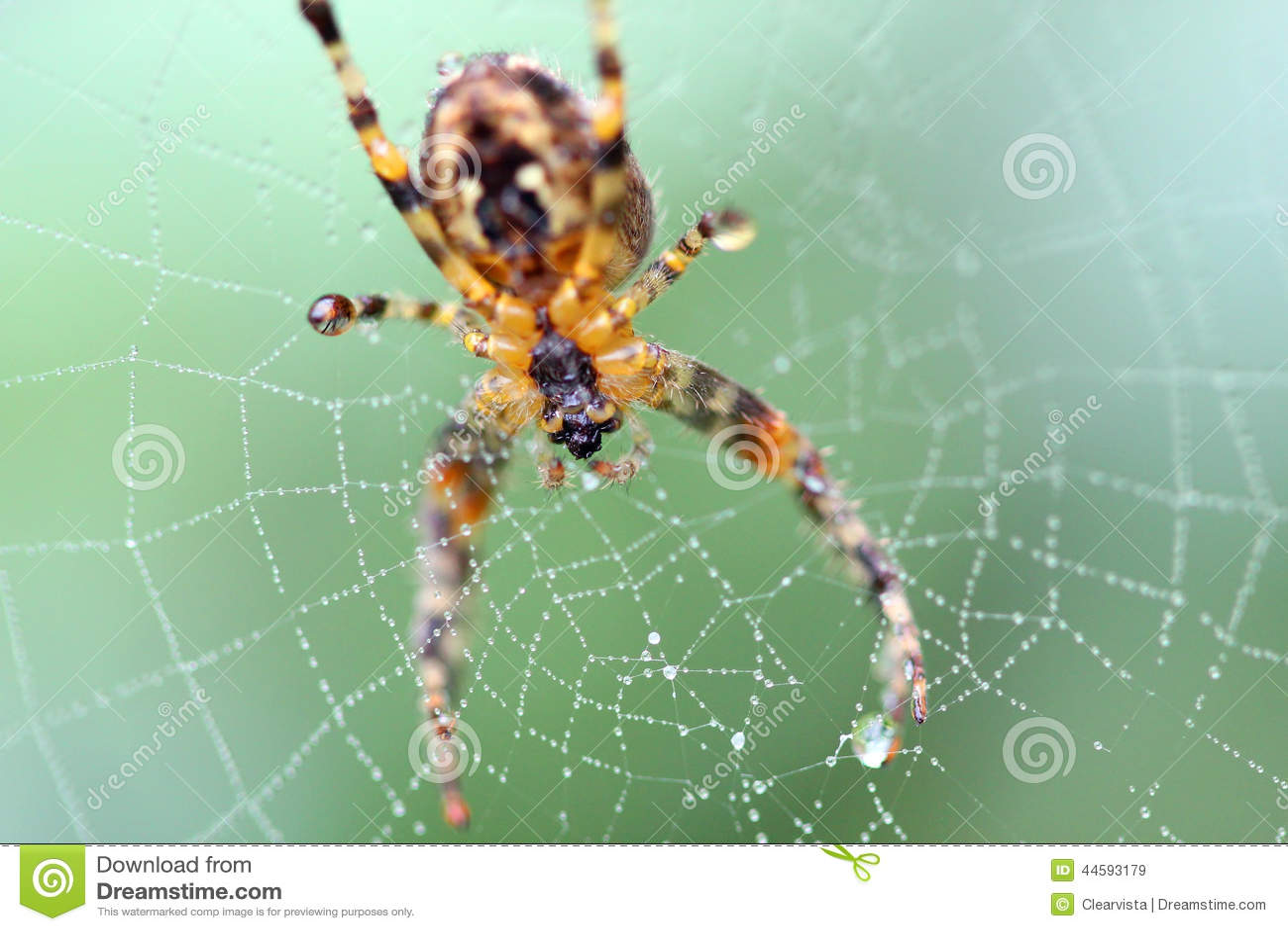 Spin op een Webmacro