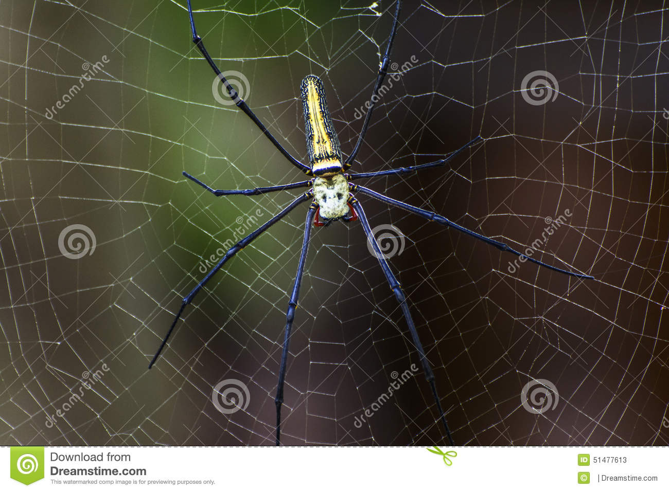 Spin op spinneweb