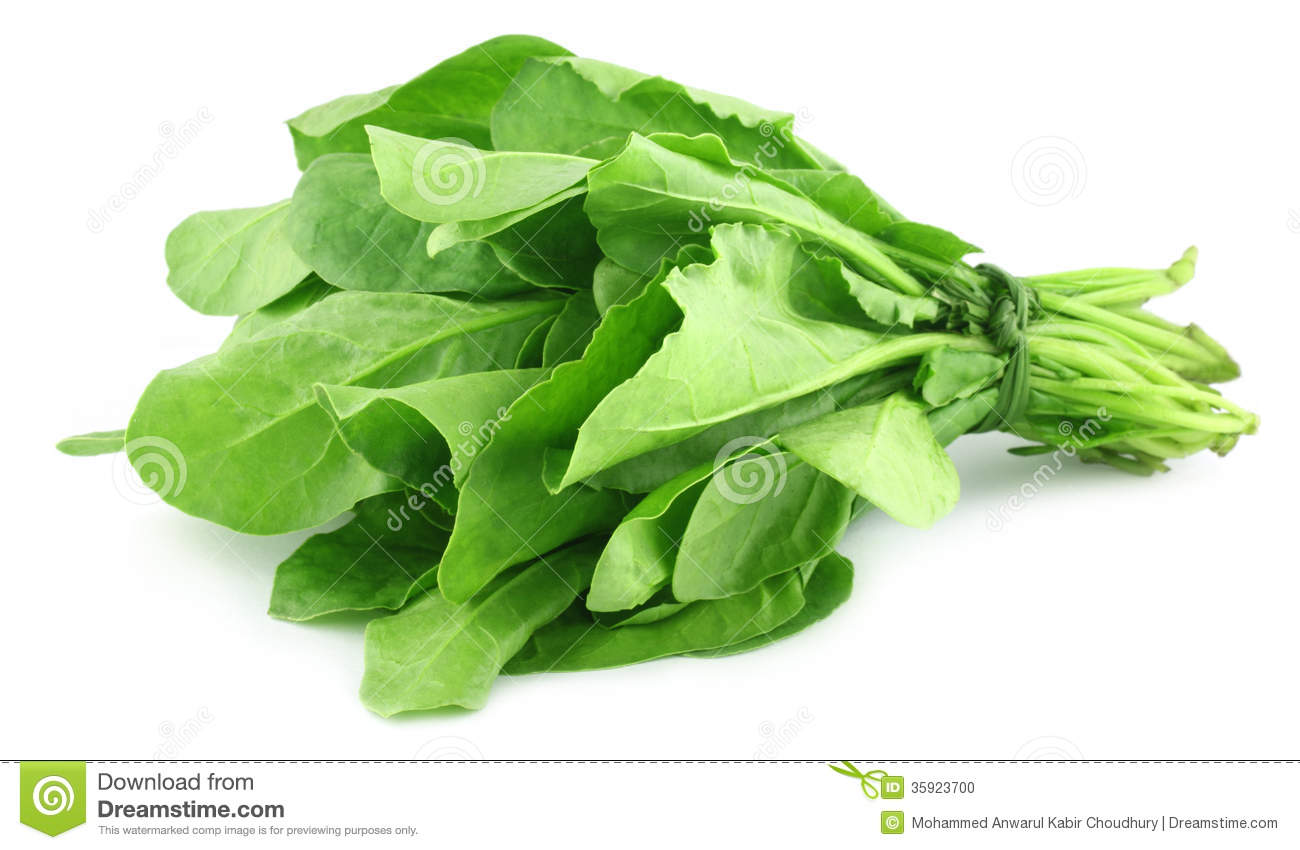 Spinach bundle  Spinach
