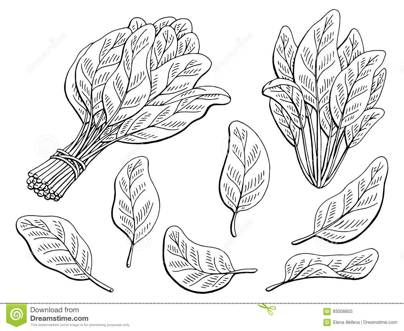 Spinach Sketch Stock Illustrations