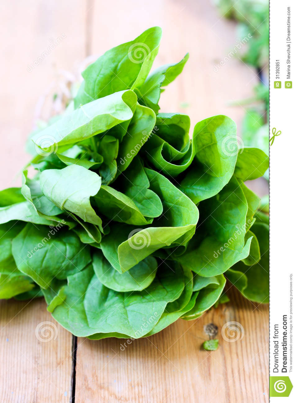 Spinach Leaves Stock Image - Image: 31392851