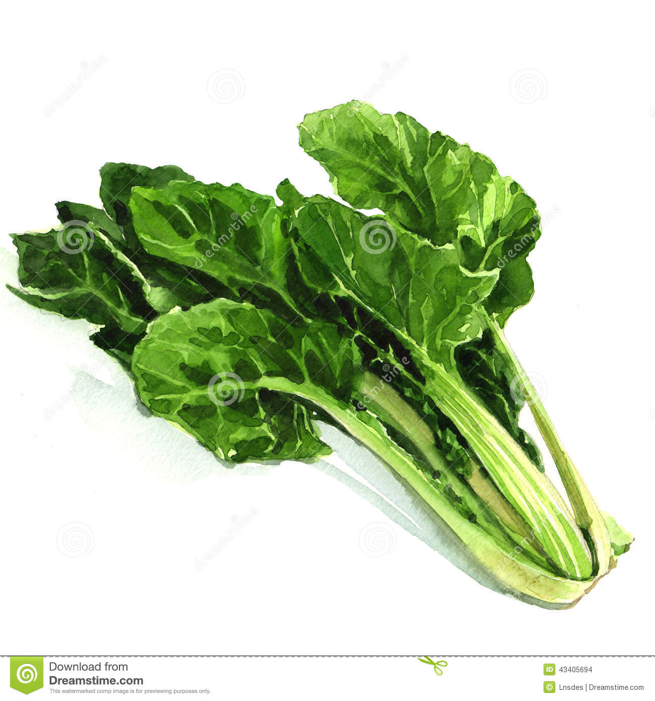 spinach leaves Spinach leaves are normally found in salads, but now they can be used as scaffolding for beating human heart cells.