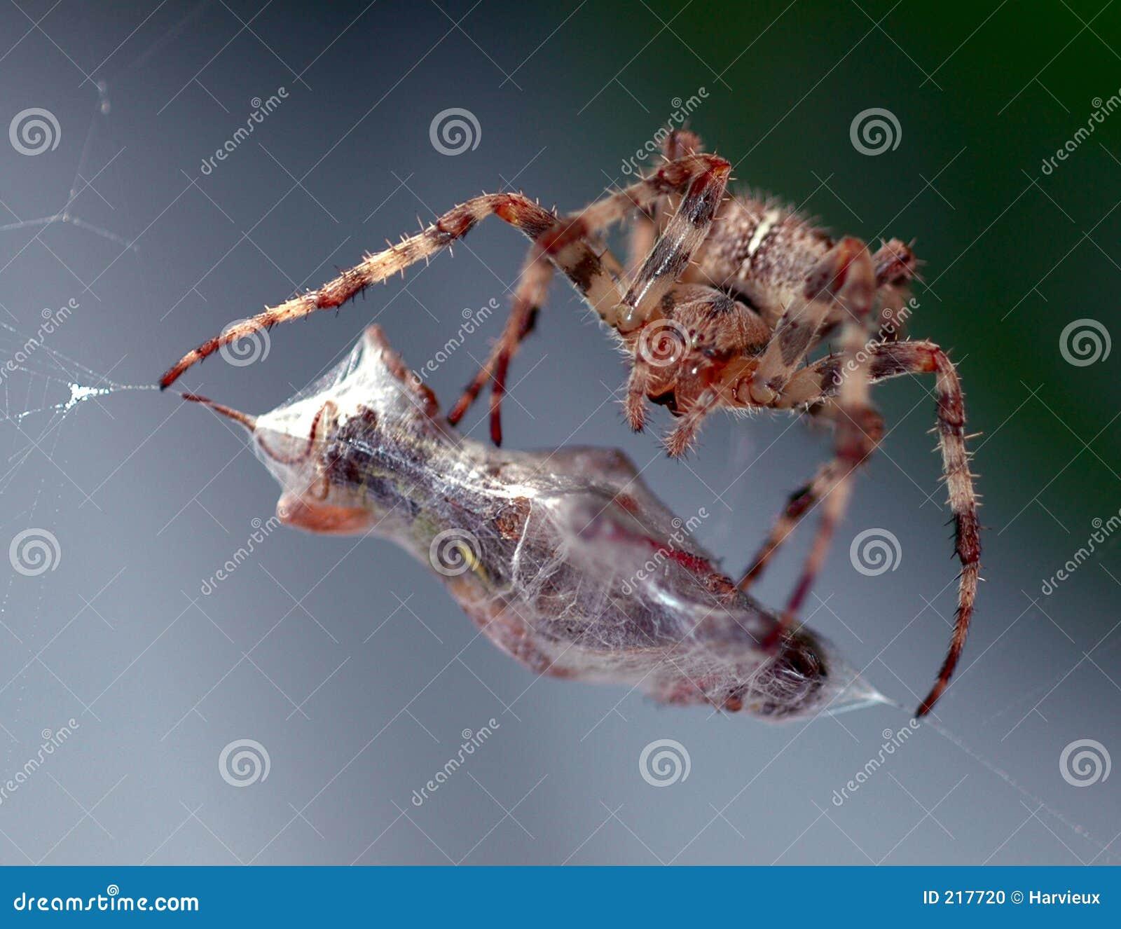 Spindel för mål s