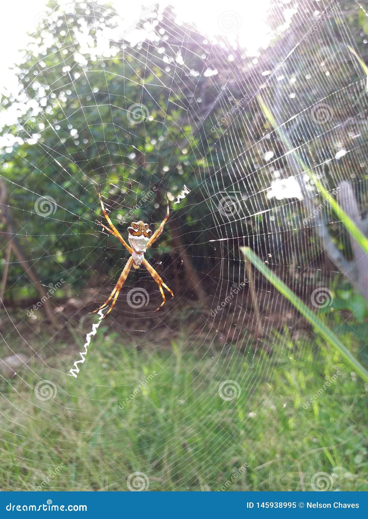 Spindel i ditt nätverk