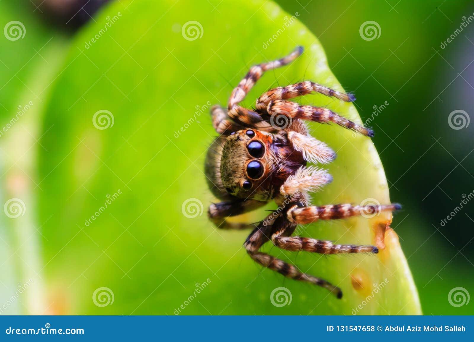 Spindel i natur