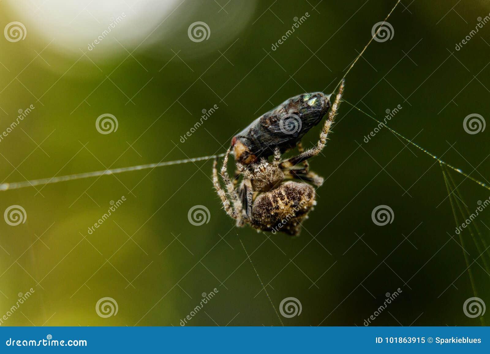 Spindel och rov