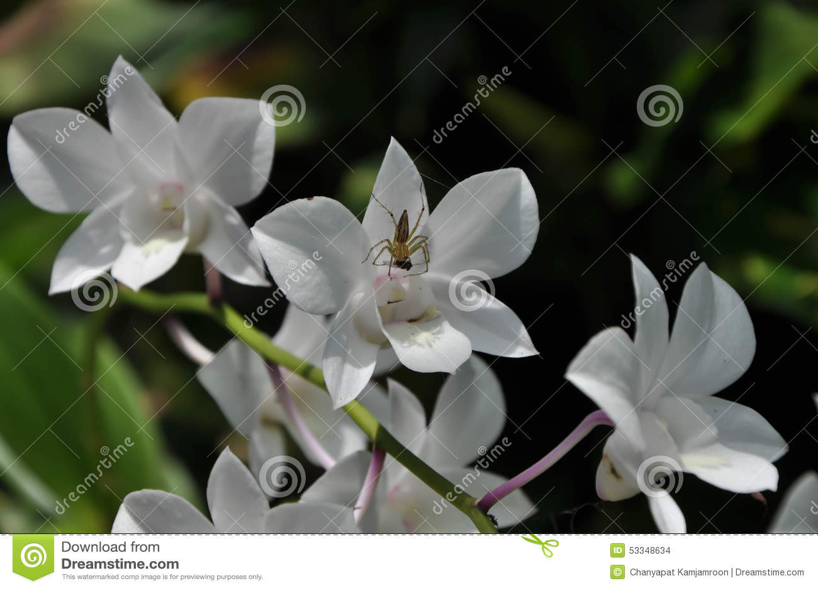 Spindel på blommor