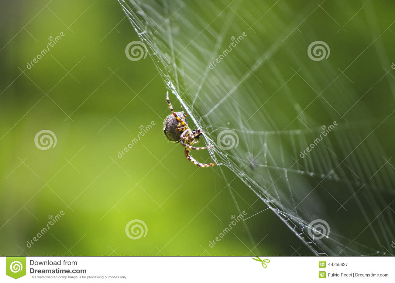 Spindel på dess rov