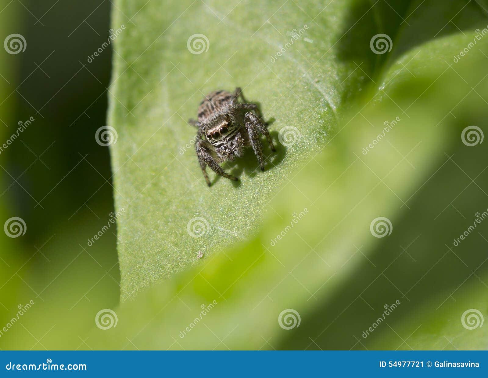 Spindel-springare