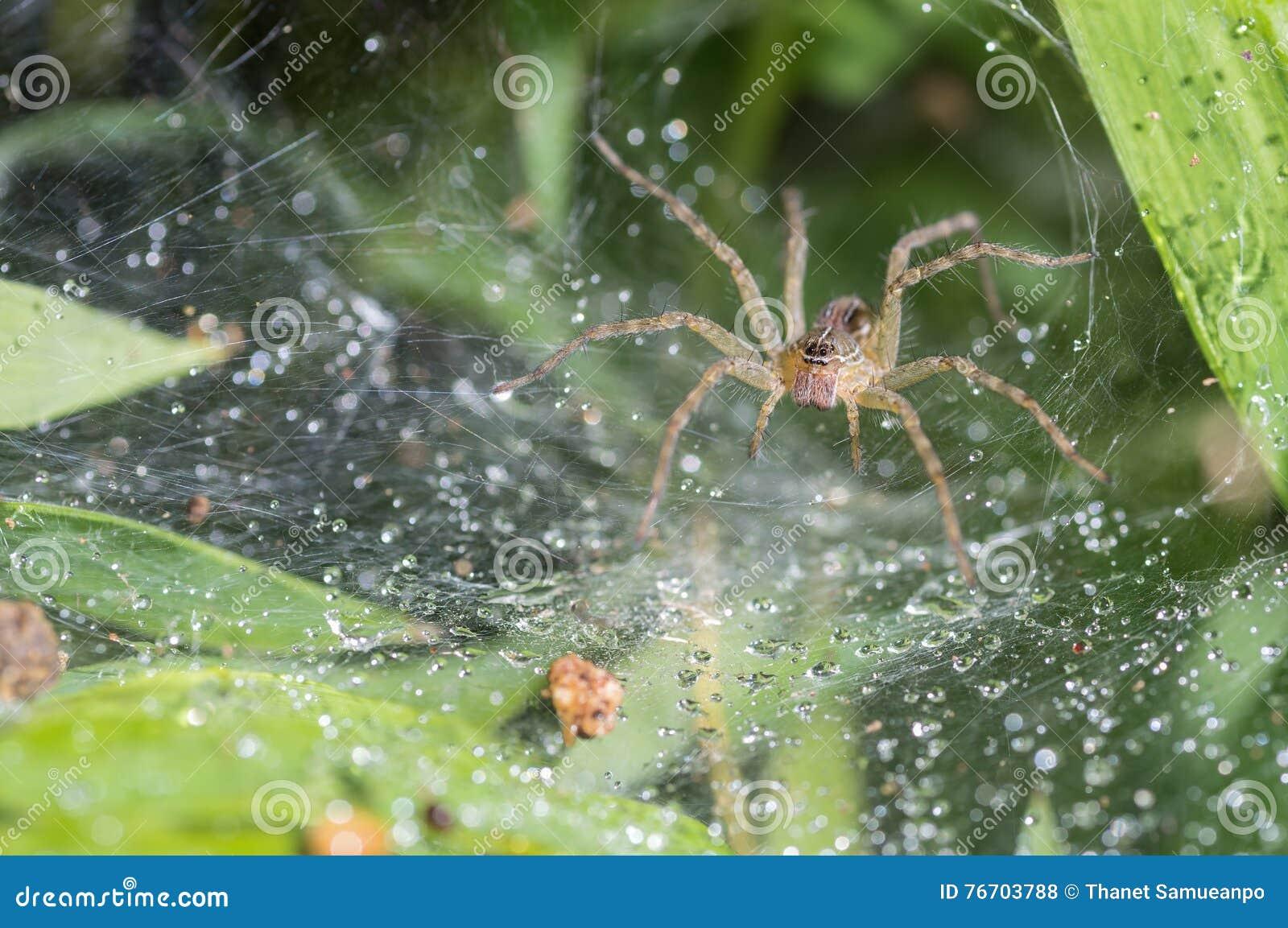 Spindeln i den oskarpa naturliga bakgrunden