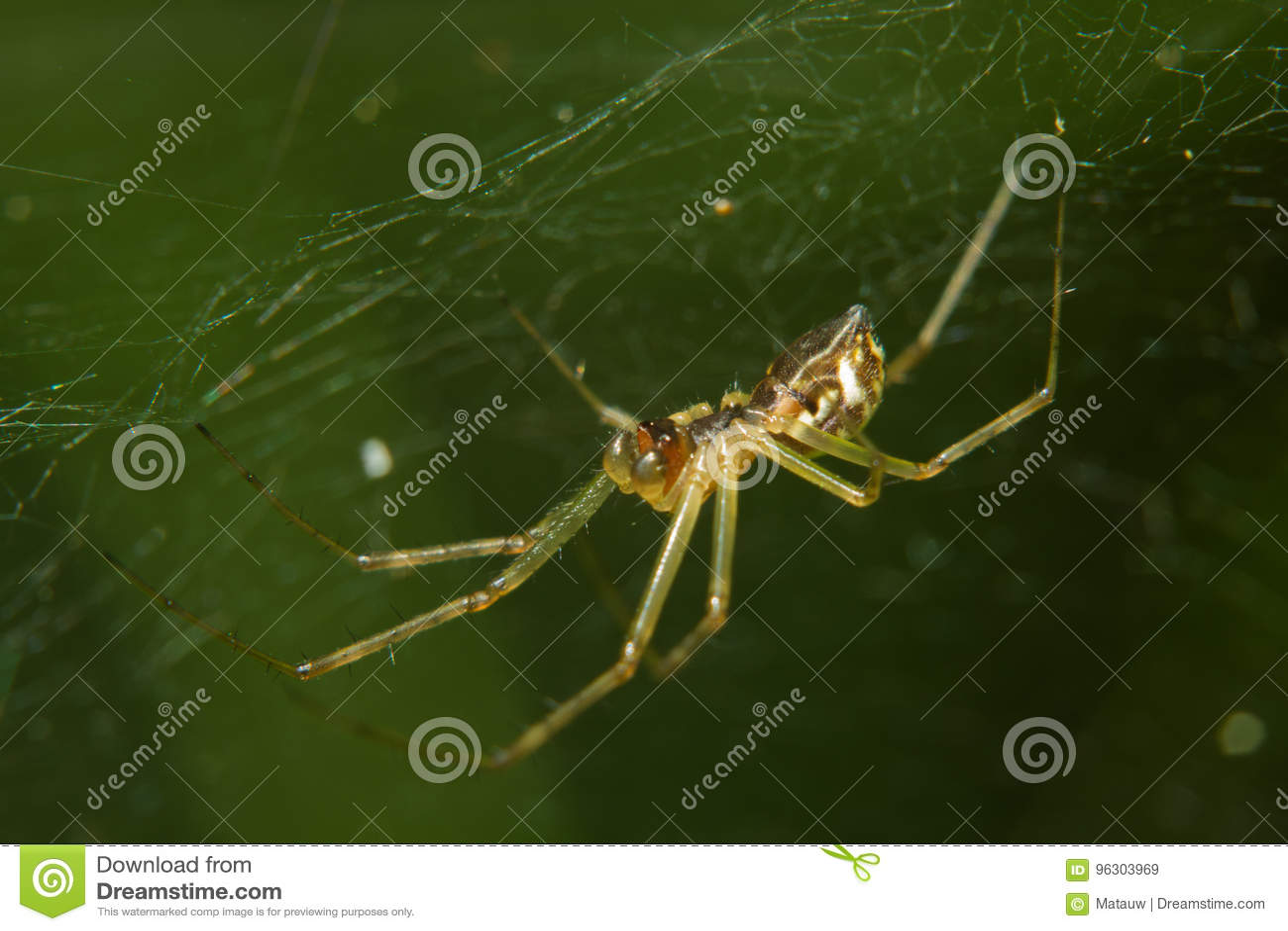 Spindeln rotera rengöringsduk
