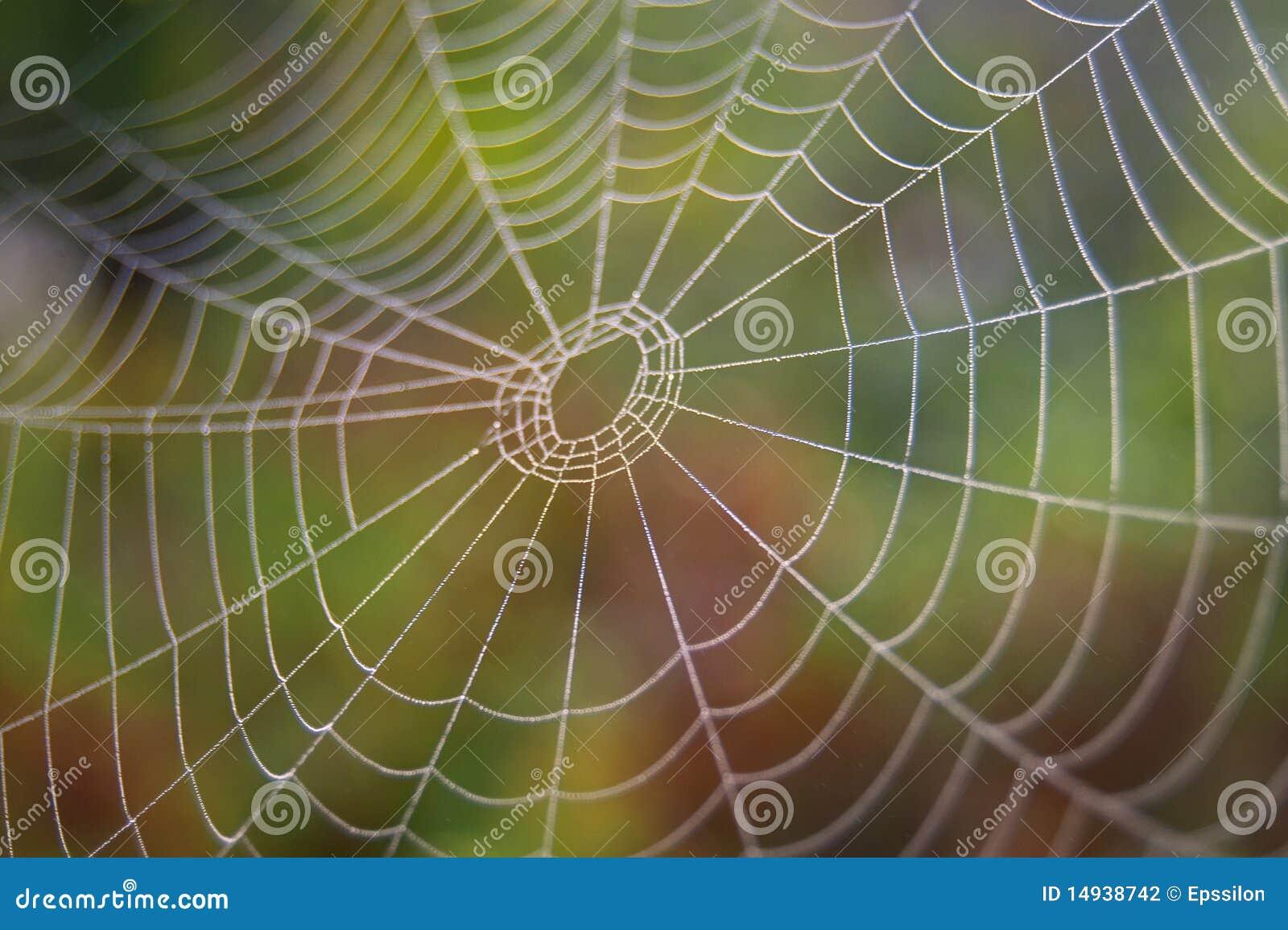 Spindelrengöringsduk