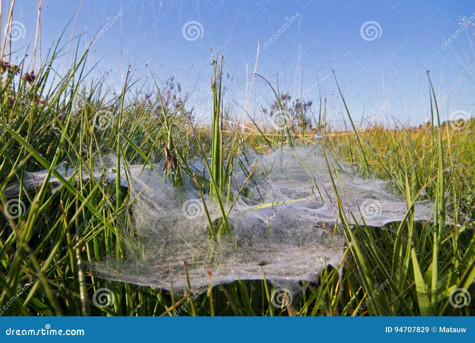 Spindelrengöringsduk för plan platta i en hed